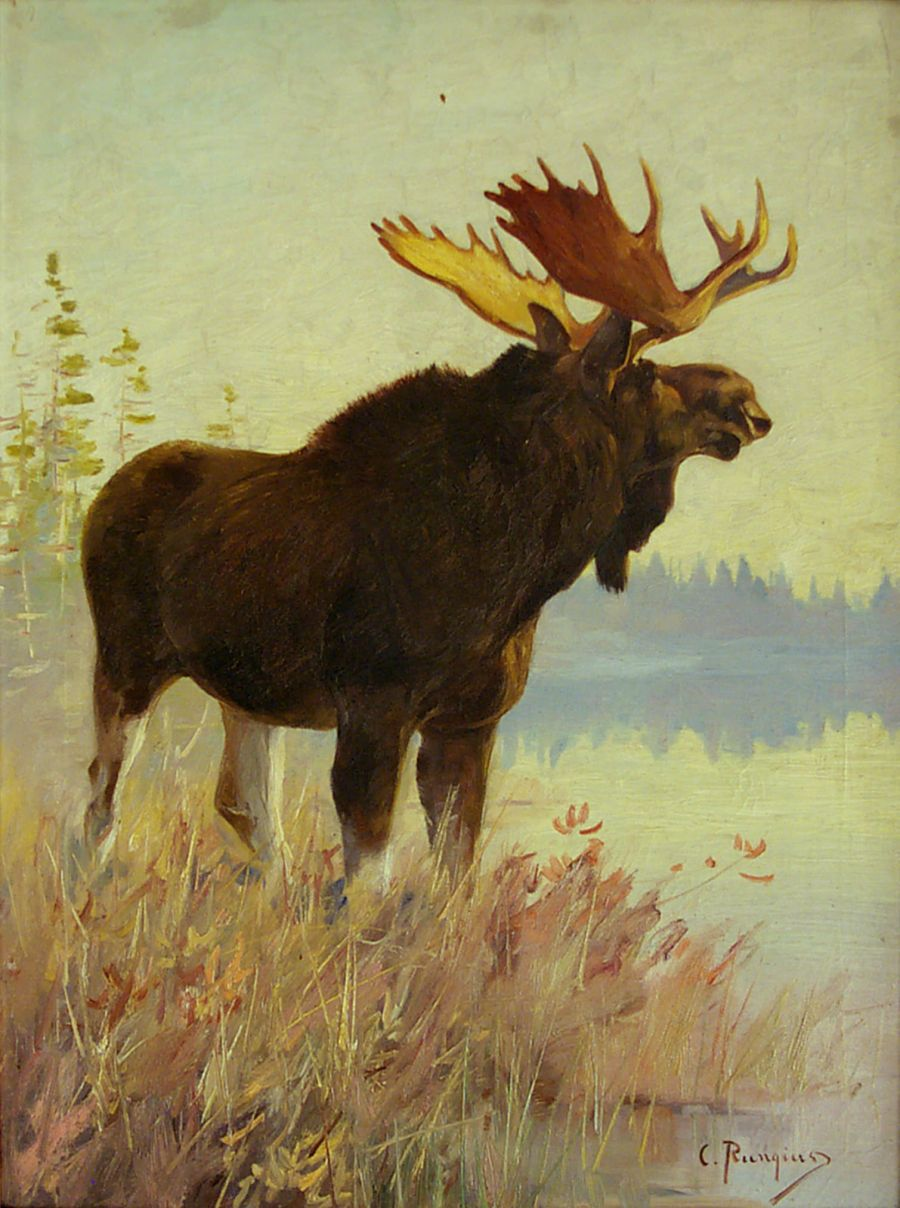 Carl Rungius (American, b. Germany, 1869 – 1959), Sportsmen's Moose, 1907. Oil on canvas. 28 x 21 inches. Purchased with Funds Generously Donated by the Robert S. and Grayce B. Kerr Foundation, National Museum of Wildlife Art. © Estate of Carl Rungius.